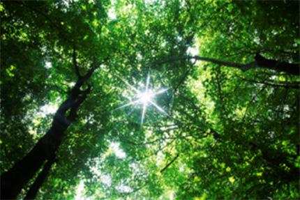 energidag om bioenergi