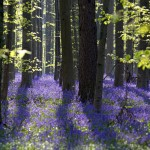 Våren Lund
