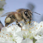 Adopt a Bee – Get honey for free