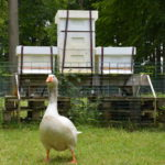 Nya bikupor till Karlslund bigård